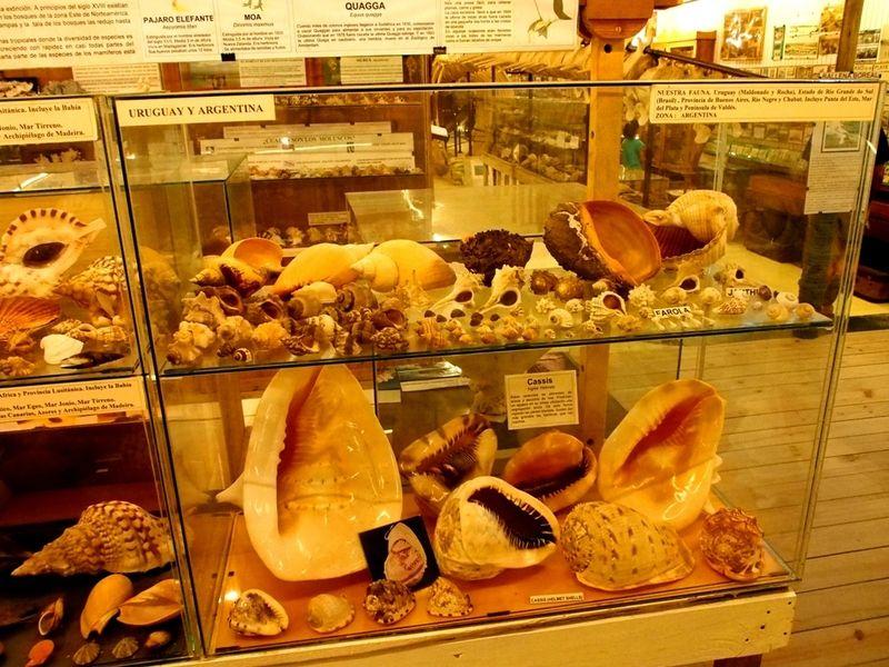 Musée de la Mer(Mollusques) P1260014_zpsyikmskhh