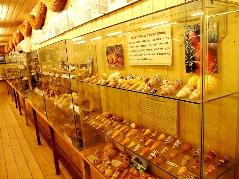 Musée de la Mer(Mollusques) P1260015_zpsf1p7fggr