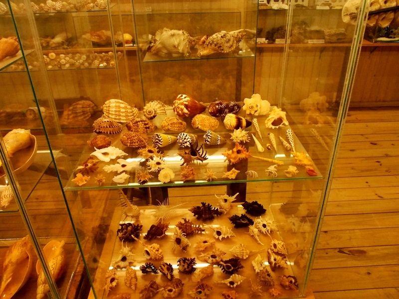 Musée de la Mer(Mollusques) P1260016_zpsaitjh0lo
