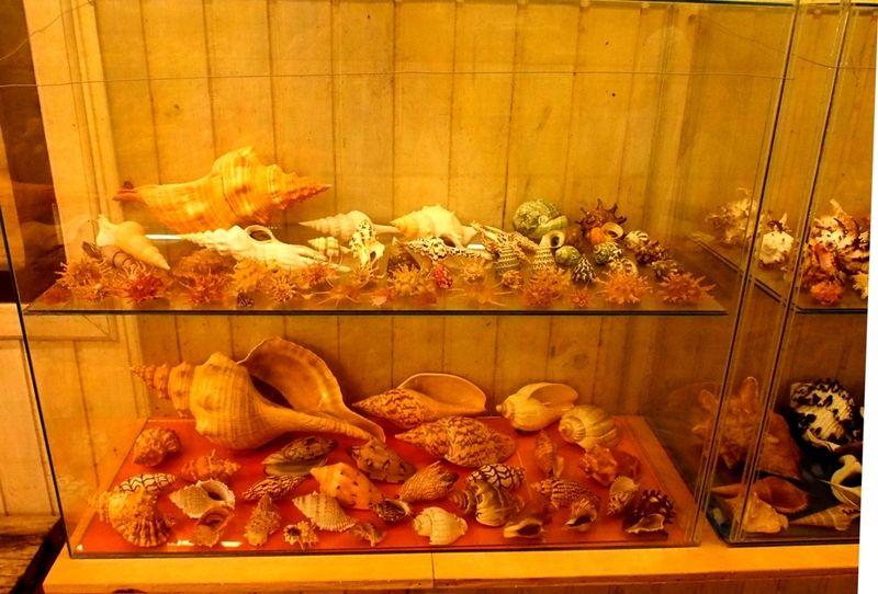 Musée de la Mer(Mollusques) P1260017_zpsskatazjv