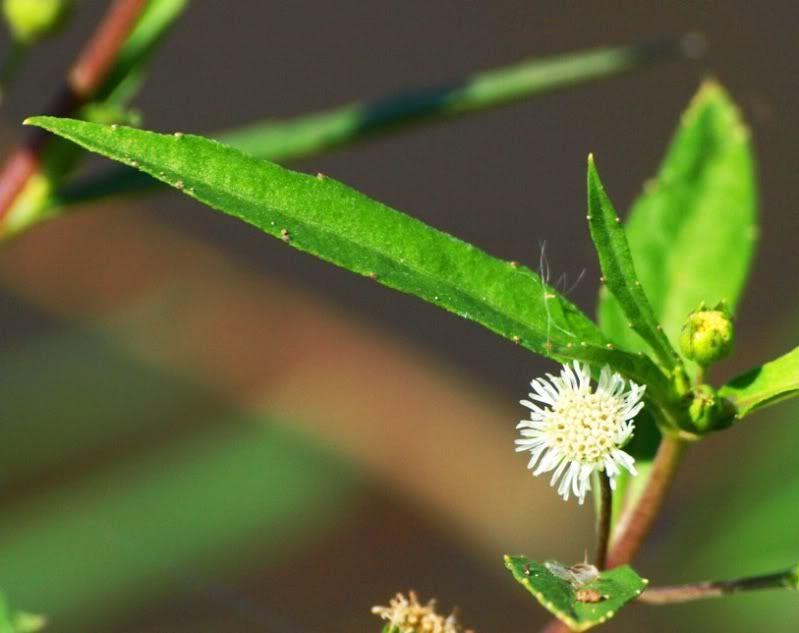 Tour de fleurs et fruits(pas pour manger) P3054600