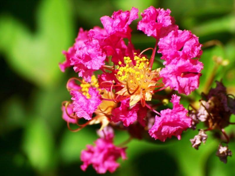 Tour de fleurs et fruits(pas pour manger) P3054621