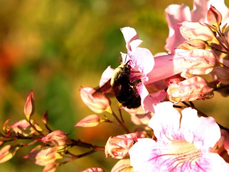Fleurs,insectes et semis P4040451