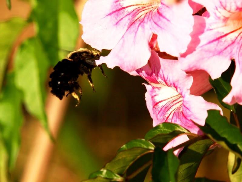 Fleurs,insectes et semis P4040452