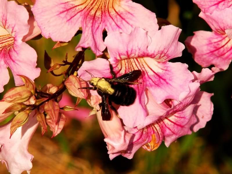 Fleurs,insectes et semis P4040453
