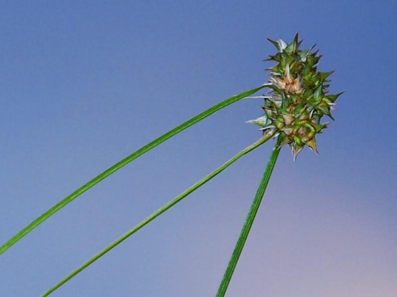 Fleurs,insectes et semis P4040460