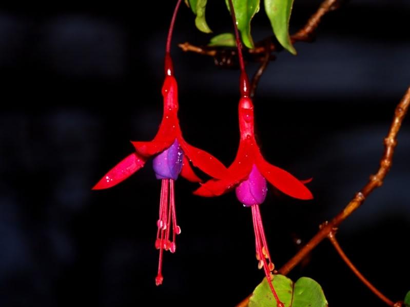 Fleurs mouillees!! P5234801