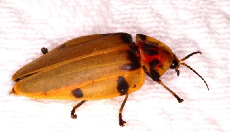 Un insecte en ville P7253688