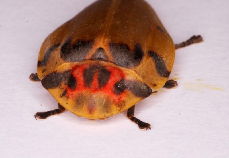Un insecte en ville P7253690