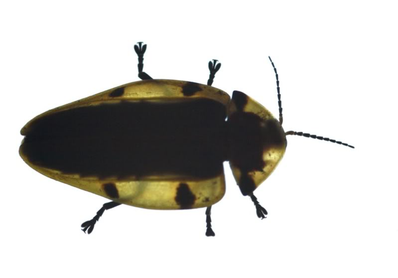 Un insecte en ville P7253710
