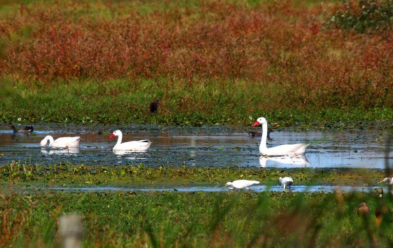 Sur le lac de mon voisin!! P3072690_zps0b066f10