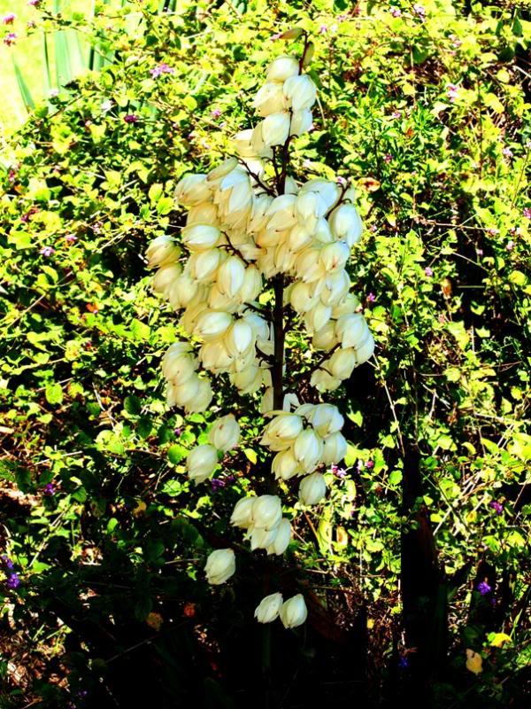 Fleur de plante épineuse!!(nom????) P3243088_zps71916ddf