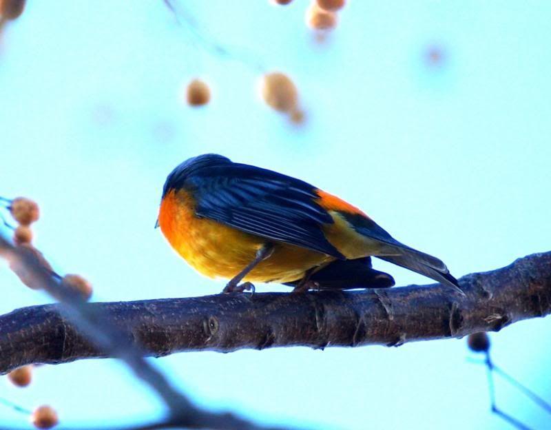 Naranjero P5033430_zpsfa9a559c