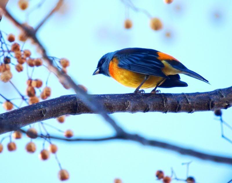 Naranjero P5033431_zps5a190f9a
