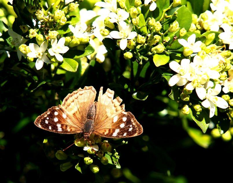 Insectes et fleurs!! P5043485_zpsdebba84c
