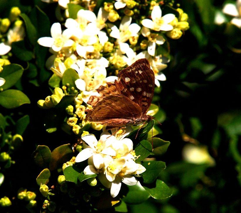 Insectes et fleurs!! P5043486_zps0da7904e