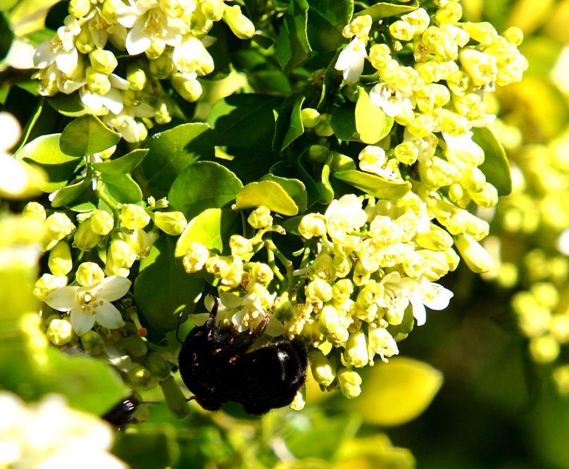 Insectes et fleurs!! P5043493_zps43bf1d32
