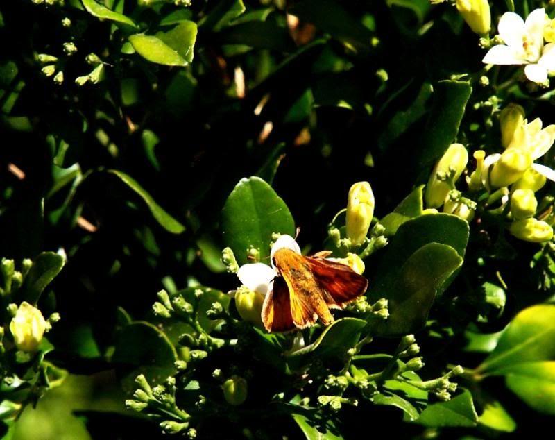 Insectes et fleurs!! P5043494_zpsc4acbfbe