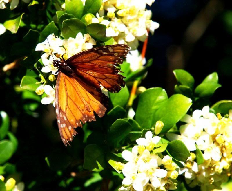 Insectes et fleurs!! P5053510_zps78bca98b