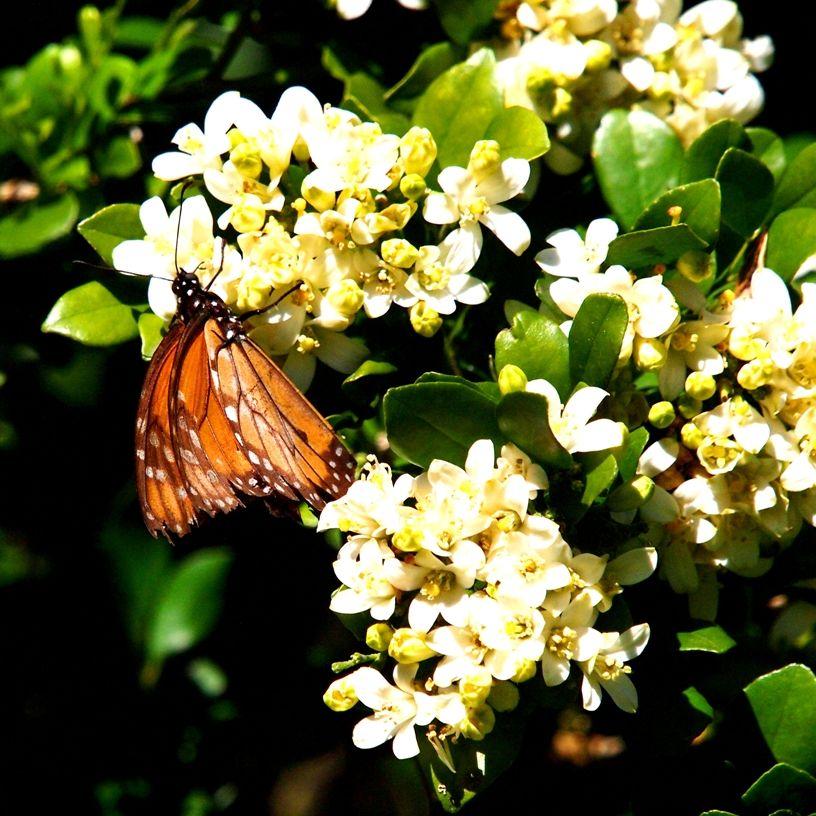 Insectes et fleurs!! P5053511_zpsc14ba8ed