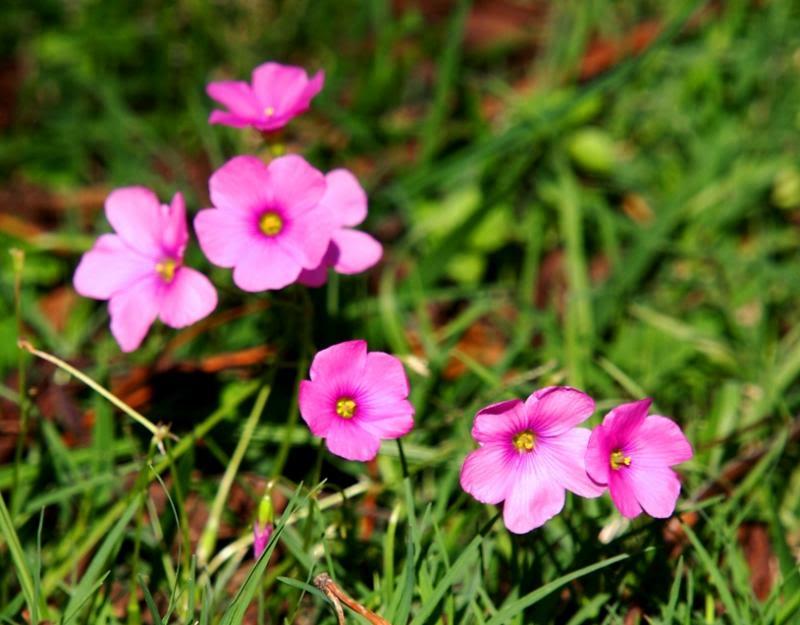 Insectes et fleurs!! P5053513_zps08801401