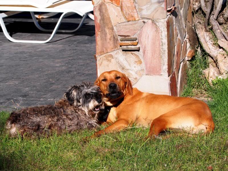 Les amis,Bico et Baloo P6060022_zps41e38bee