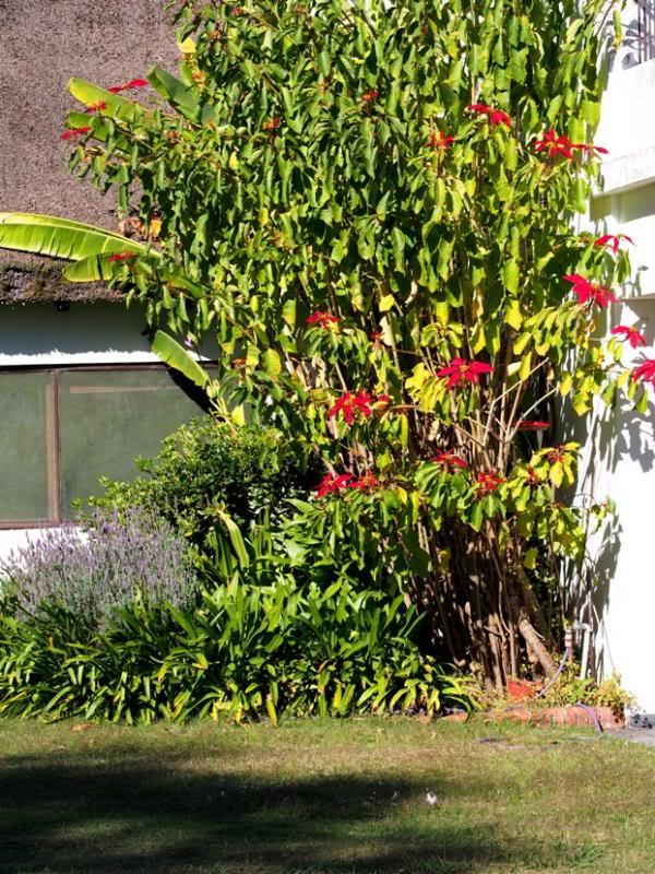 Les fleurs du jardin P6060034_zps4a0a59ad