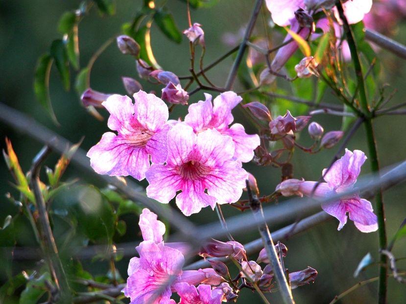 Fleurs et bourdon!! P6100008_zpsc941f5b1