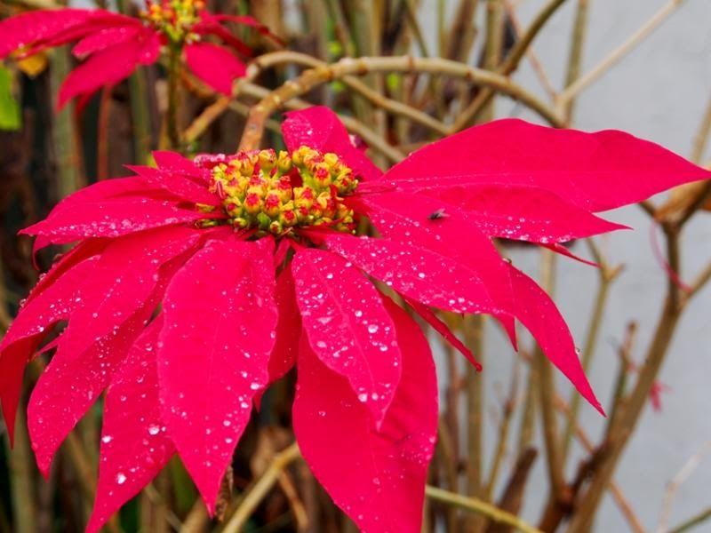 Fleurs sous la pluie!! P7040005_zps5f0773f7