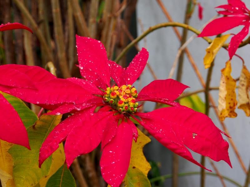 Fleurs sous la pluie!! P7040006_zpsbe0d5155