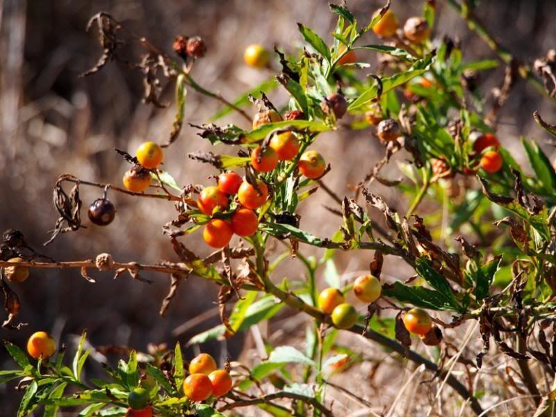 Plante sauvage P7170039_zps4d548c59