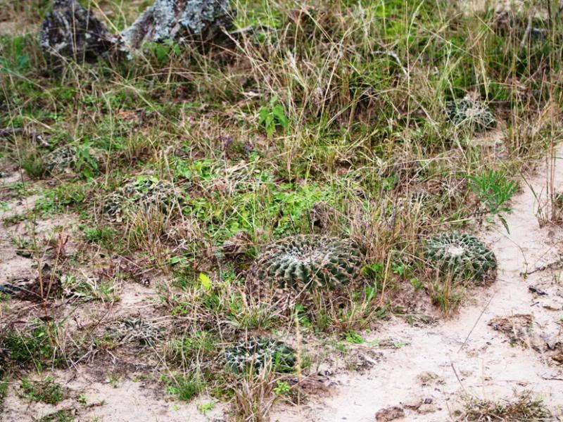 Cactus et champignons P7200007_zpsb1792333