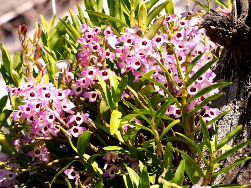 Les fleurs qui annoncen le printemps!! P8310020_zps22053fd8