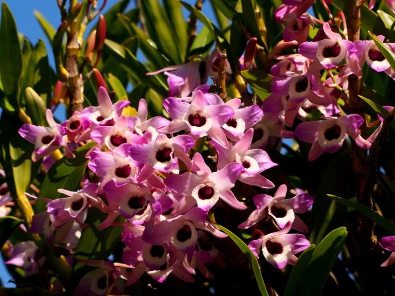 Les fleurs qui annoncen le printemps!! P8310023_zps38ef77d7