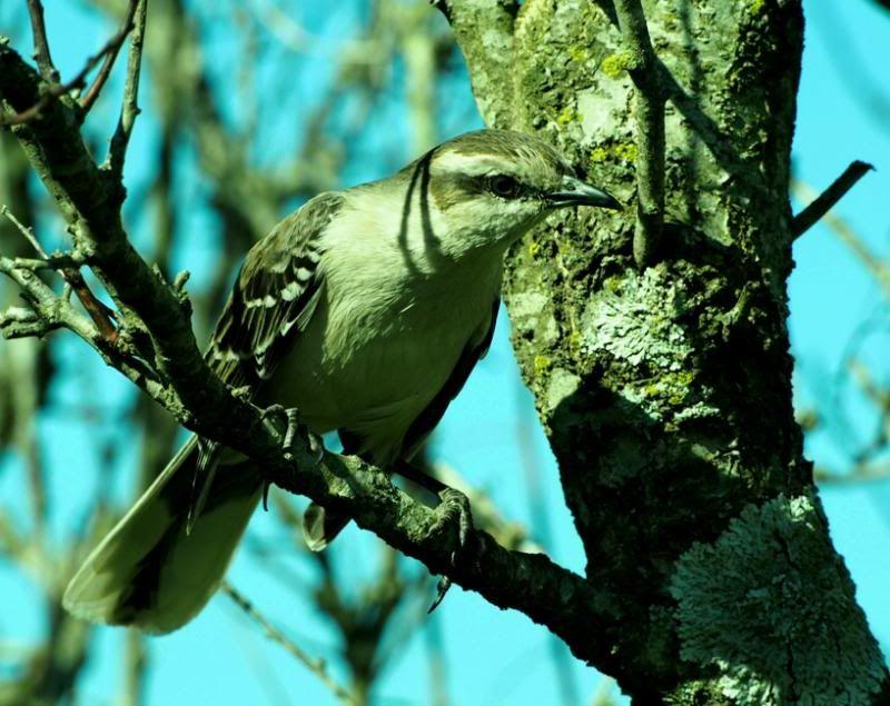 Oiseaux par la!! P8310064_zps1ff75210