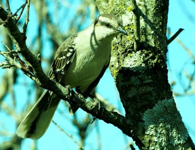 Oiseaux par la!! P8310065_zps06d5a3c0