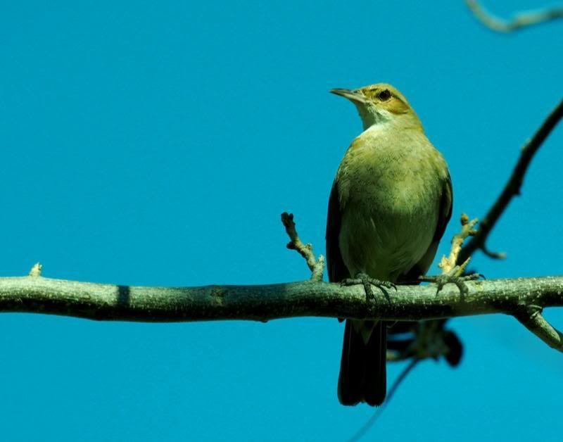 Oiseaux par la!! P8310066_zpsc546600c