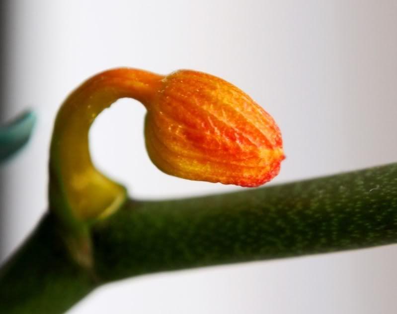 Café et orchide!! P9130016