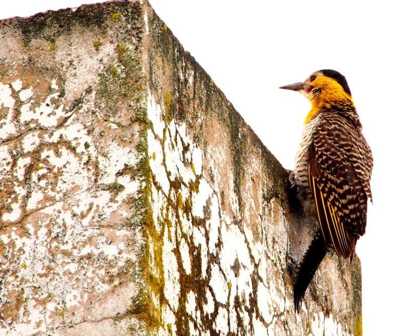 Oui!!!Encore des oiseaux!! P9140023_zps4ebca83b