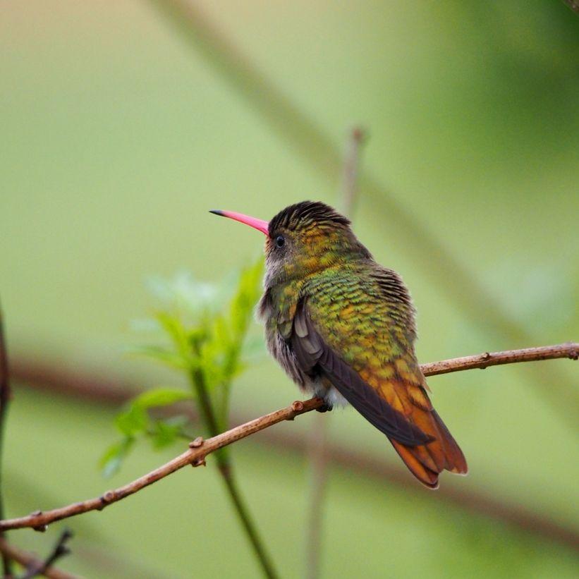 Oui!!!Encore des oiseaux!! P9140024_zpsaad19828