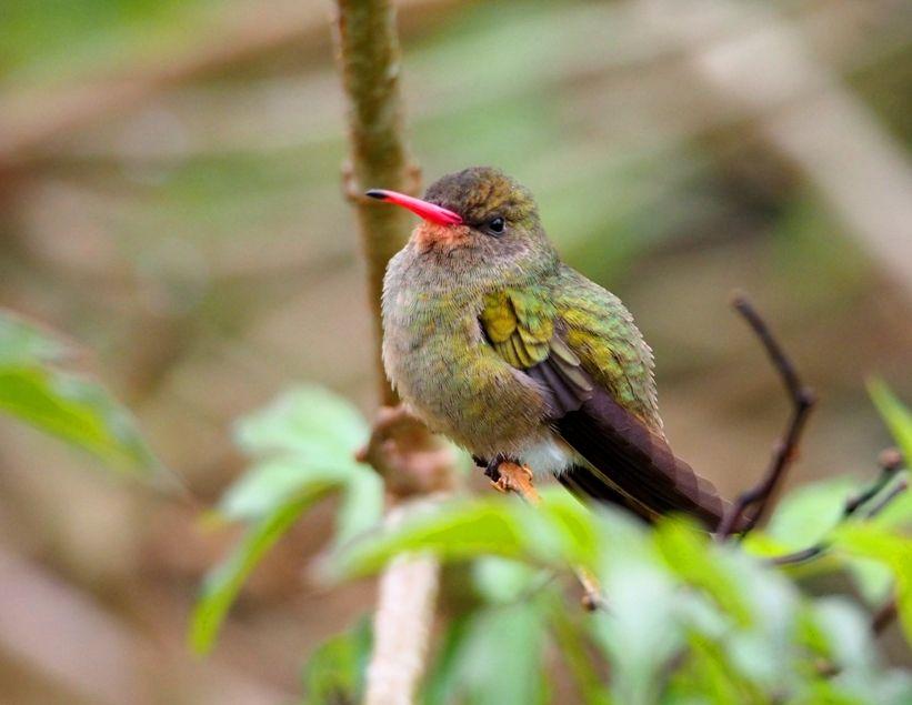 Oui!!!Encore des oiseaux!! P9140025_zps087dbc40
