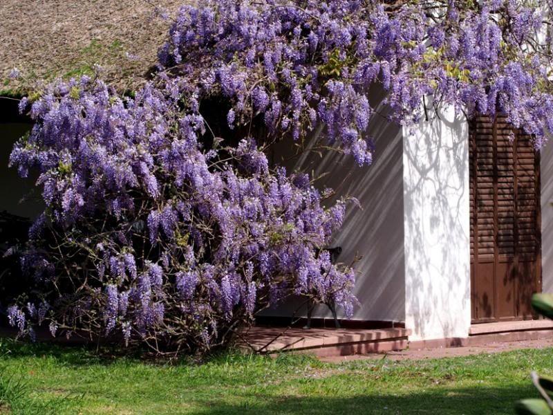 Couleurs du jardin... P9180046_zpscd468231