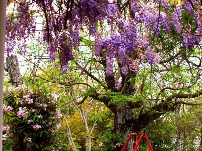 Fleurs du jardin (diverses) P9203781_zps4a659552