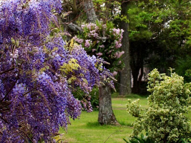 Fleurs du jardin (diverses) P9203782_zps16f55604