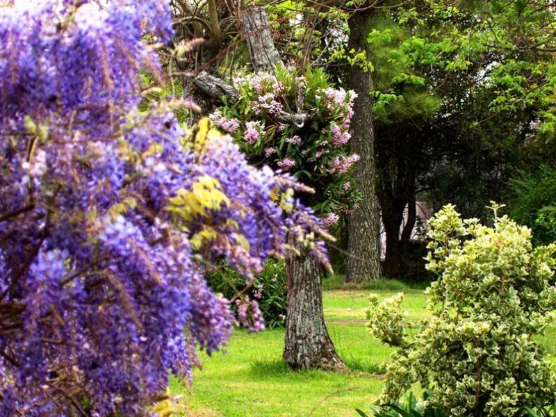 Fleurs du jardin (diverses) P9203783_zpsa36fa4b5