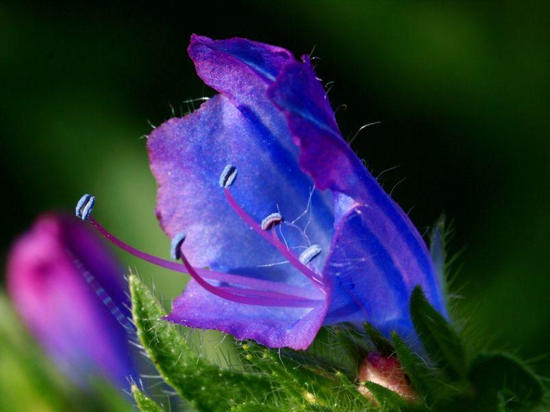 Fleurs sauvages-5 PA155067