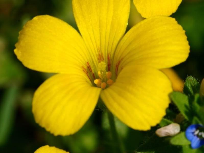 Fleurs sauvages-6 PA155079