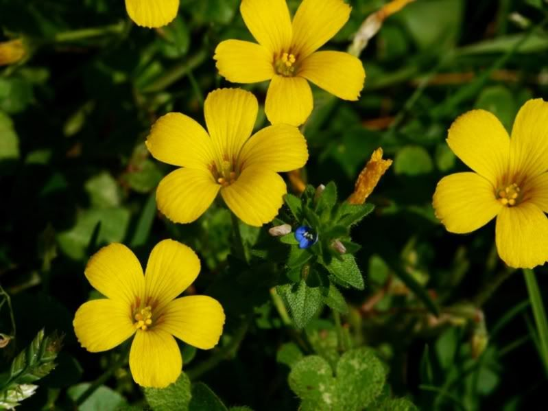 Fleurs sauvages-6 PA155080