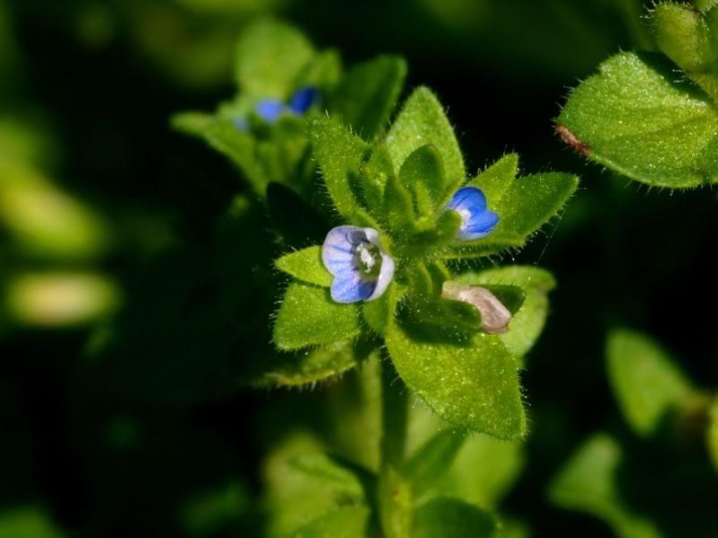 Fleurs sauvages-6 PA155081