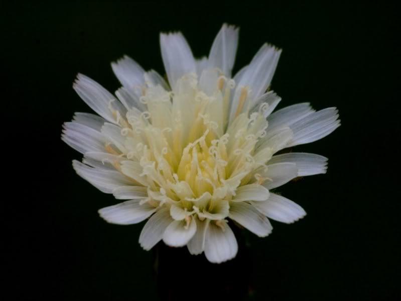 Fleurs sauvages-7 PA155086